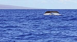 Heaven On Earth, The Maui Way!
