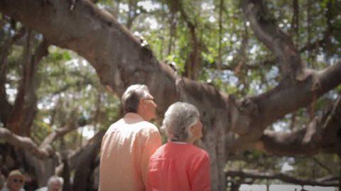 Lahaina Town: Explore Maui's History
