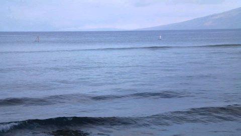 Maui Kai: Frolicking Fins