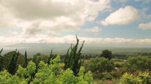 Visit Upcountry Kula, Maui, Hawaii